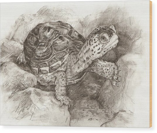 Diamondback Terrapin Wood Print