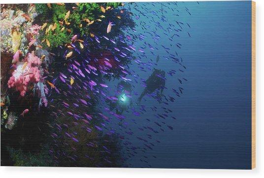 Divers Along Reef Wood Print