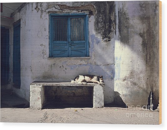 Dog Sleeps On A Bench Outdoor In Wood Print by Sergio Capuzzimati