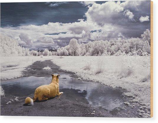 Doggy Daydream Wood Print