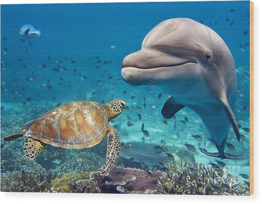 Dolphin And Turtle Underwater On Reef Wood Print