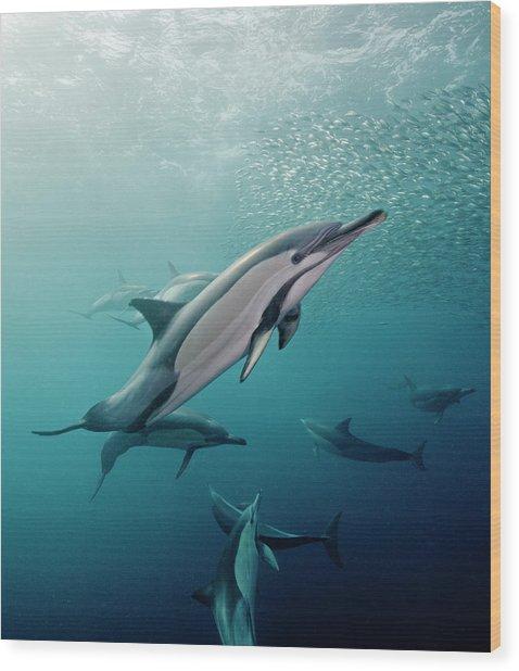 Dolphin Portrait Wood Print