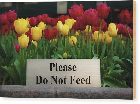 Dont Feed The Tulips Wood Print