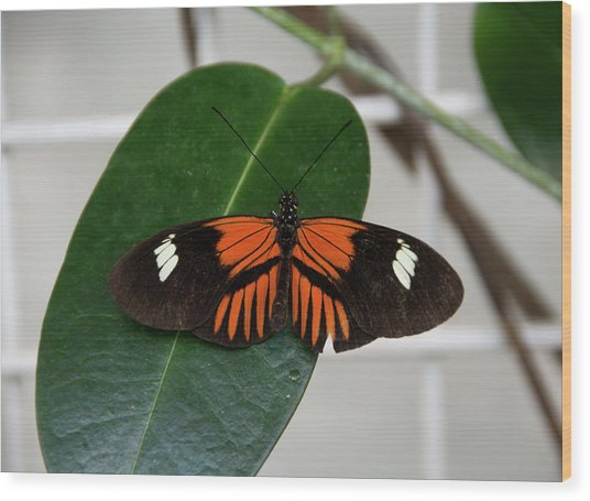 Doris Longwing On Leaf Wood Print