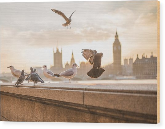 Doves And Seagulls Over The Thames In London Wood Print