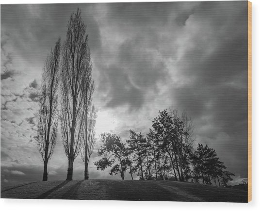 Dramatic Fall Trees Wood Print