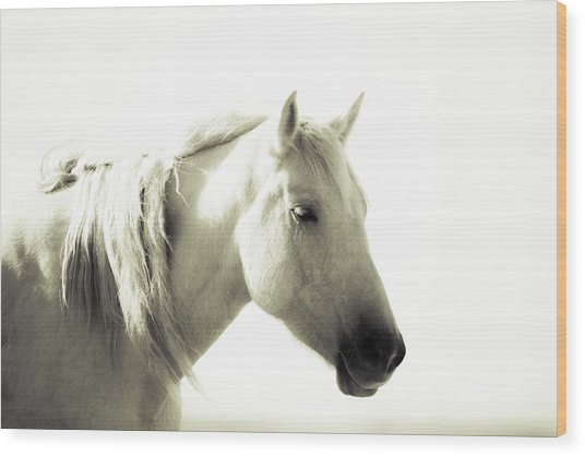 Dreamy Mare Wood Print