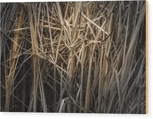 Dried Wild Grass II Wood Print