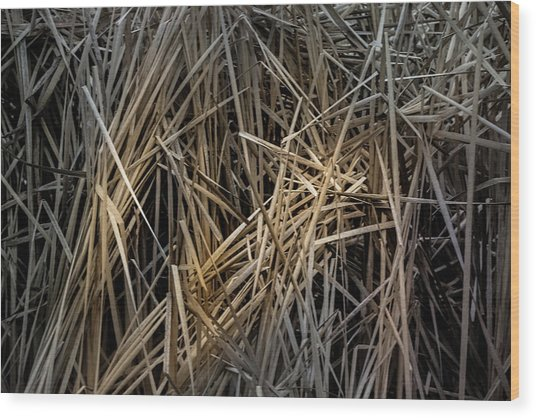 Dried Wild Grass IIi Wood Print