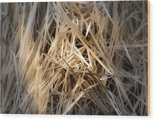 Dried Wild Grass I Wood Print