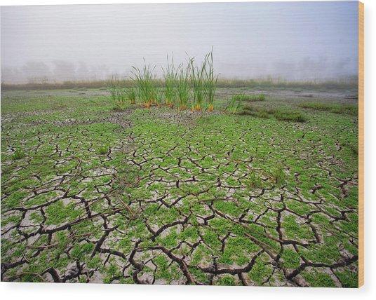 Dry Duck Pond Wood Print