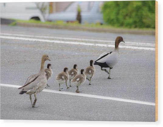 Duck Family Crossing The Road Wood Print by Photo By Tse Hon Ning