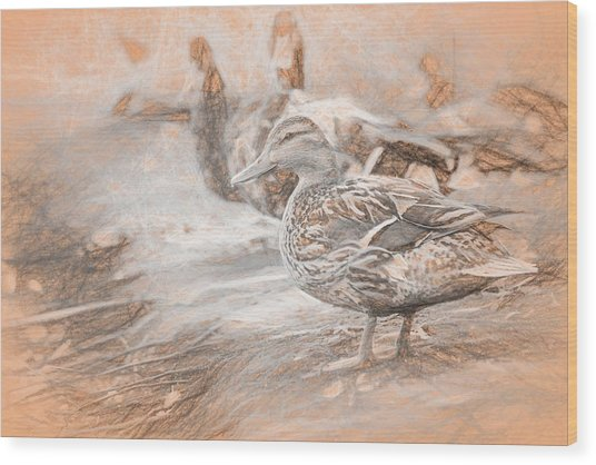 Ducks On Shore Da Vinci Wood Print