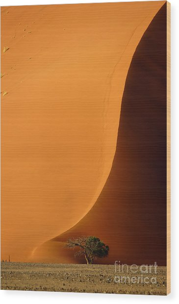 Dune 40 And Acacia Tree At Sunrise Wood Print