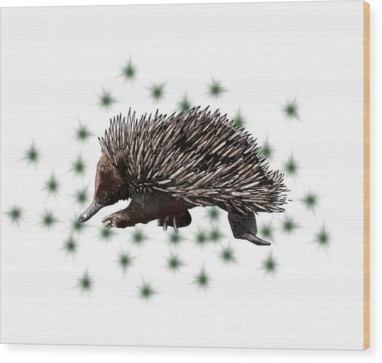 E Is For Echidna Wood Print