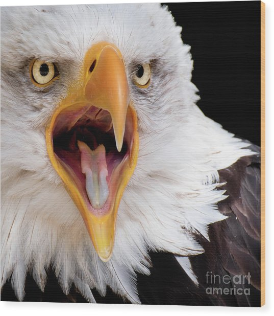 Eagle Calls Wood Print