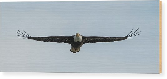 Eagle Flying At You Wood Print