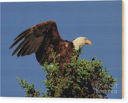 Eagle In Treetop Wood Print