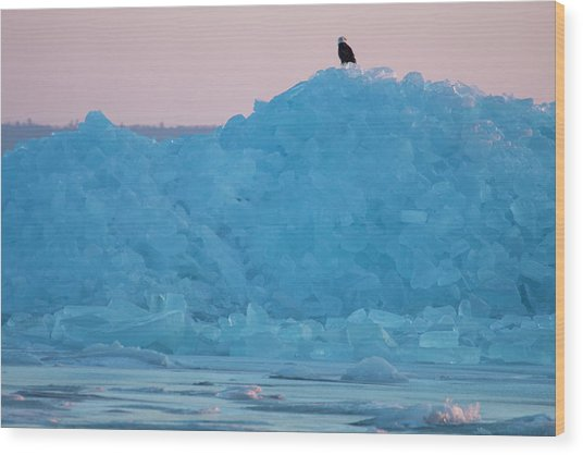 Eagle On Ice Mackinaw City 2261803 Wood Print