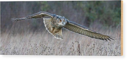 Eagle Owl Gliding Wood Print