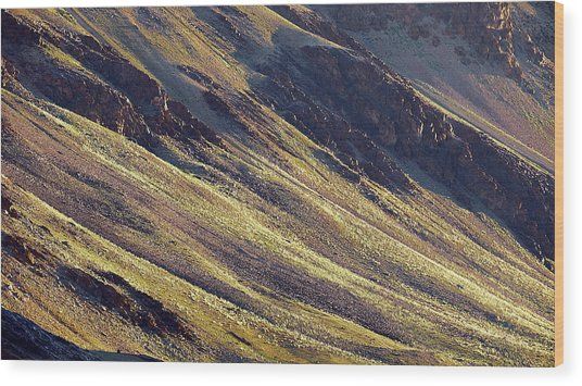 Early Morning Light On The Hillside In Sarchu Wood Print