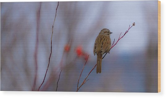 Early Spring Sparrow Wood Print