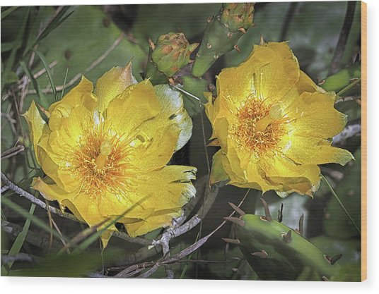 Wood Print featuring the photograph Eastern Prickley Pear Cactus Flower On Assateague Island by Bill Swartwout Fine Art Photography