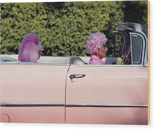Elderly Woman And Pink Poodle In Pink Wood Print by Tim Macpherson