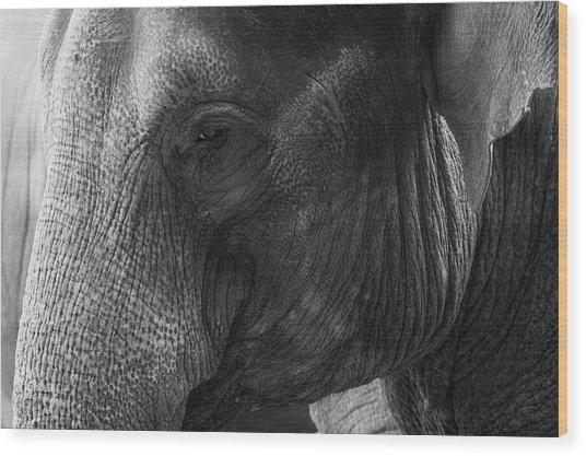 Elephant Wood Print by Andrew Dernie
