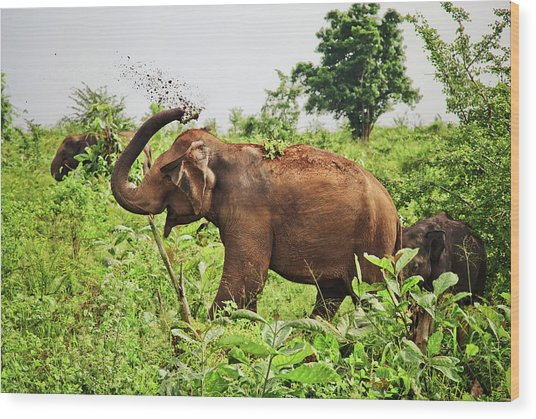 Elephant Wood Print by Basia Asztabska