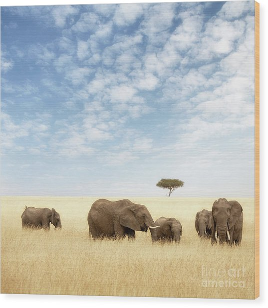 Elephant Group In The Grassland Of The Masai Mara Wood Print