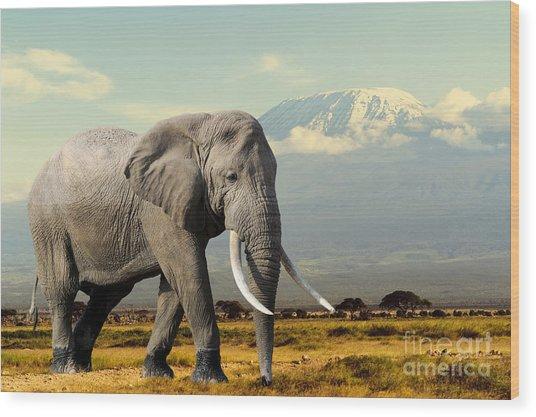 Elephant On Kilimajaro Mount Background Wood Print