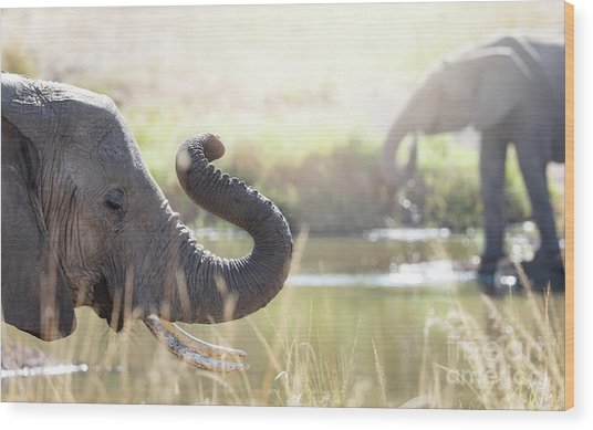 Elephants At A Watering Hole Wood Print