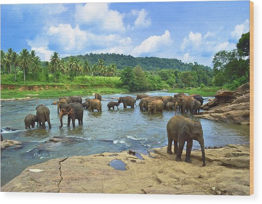 Elephants Bathing In River Wood Print