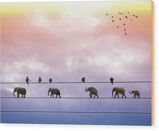 Elephants On The Wires Wood Print