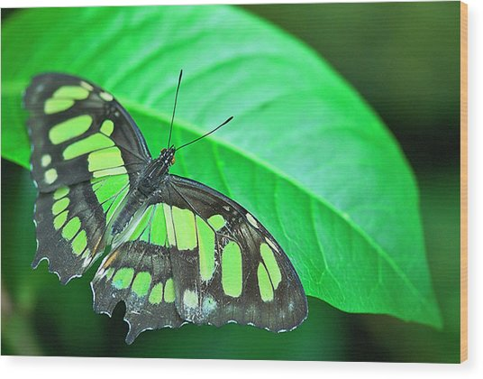 Emerald Wood Print by By Ken Ilio