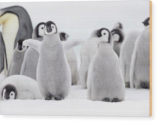 Emperor Penguin Wood Print by Martin Ruegner
