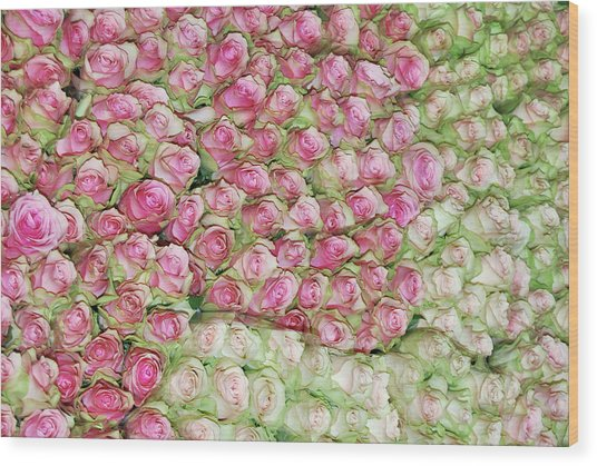 Empress Josephine's Roses Wood Print