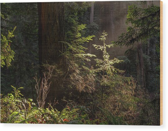 Enchanted Daybreak Wood Print