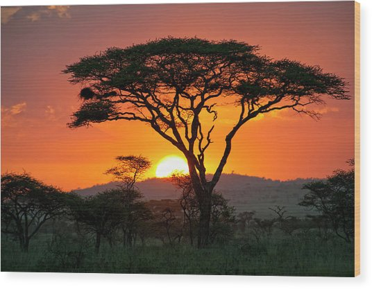 End Of A Safari-day In The Serengeti Wood Print by Guenterguni
