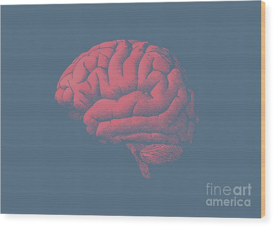 Engraving Brain Illustration With Tint Wood Print