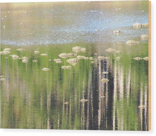 Estero Trail_3084_11 Wood Print