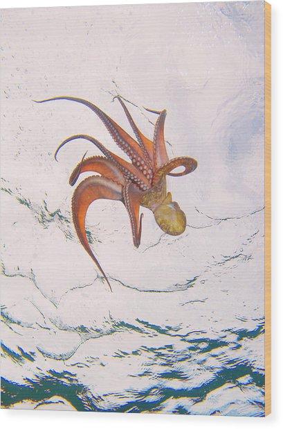 European Octopus Wood Print
