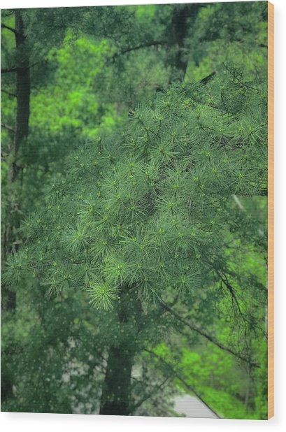 Ever Green Wood Print