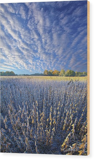 Wood Print featuring the photograph Every Moment Spent by Phil Koch