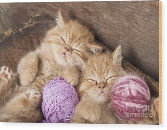 Exotic Kittens   Sleeping With A Ball Wood Print
