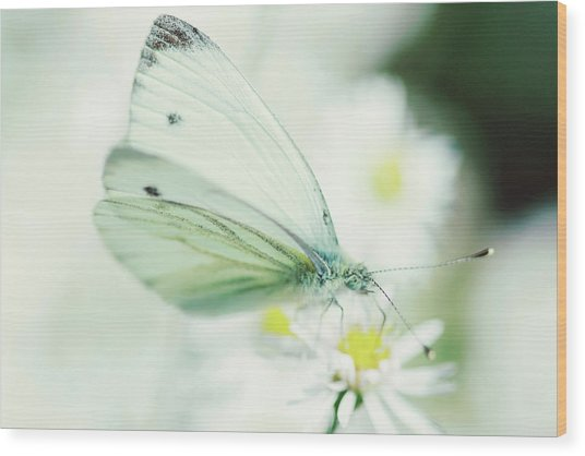 Extreme Close Up Of White Butterfly & Wood Print by Les Hirondelles Photography