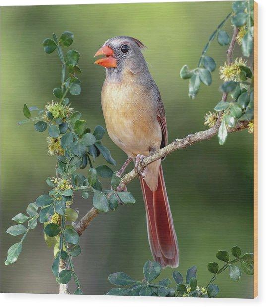 Fabulous Female Cardinal Wood Print