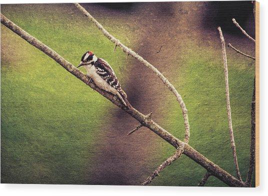 Faded Canvas Woodpecker Wood Print