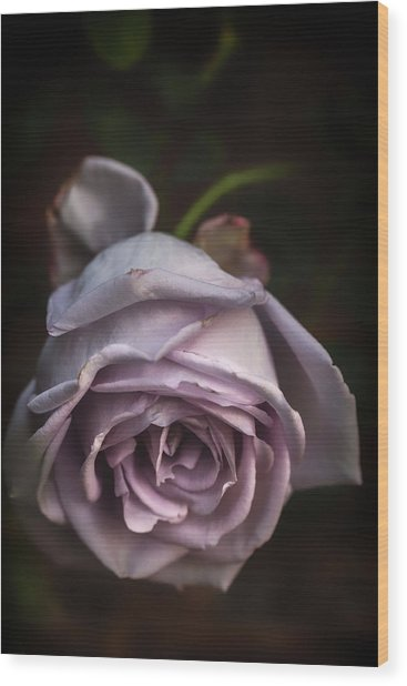 Fading Bloom Wood Print